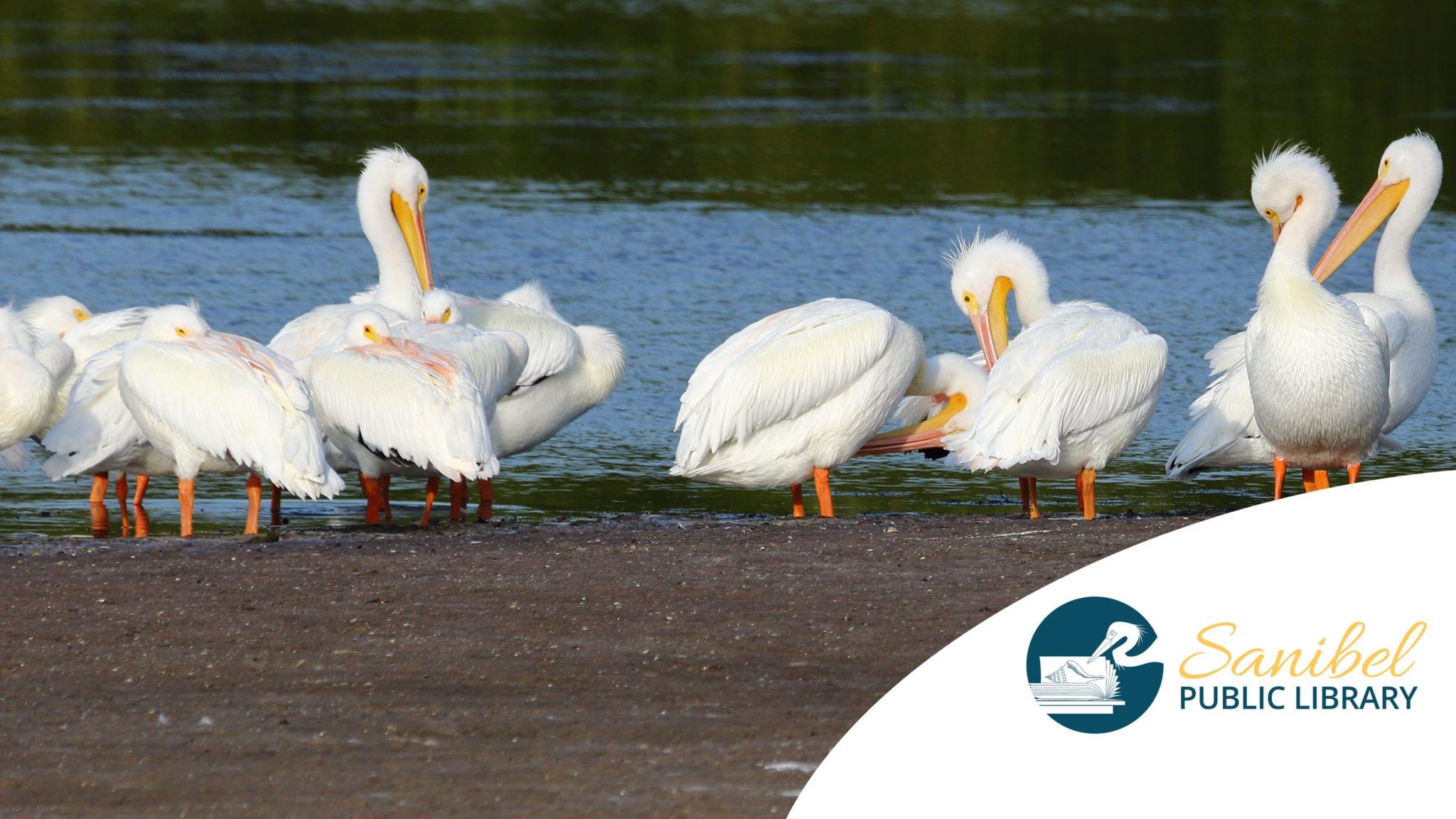 pelican-group