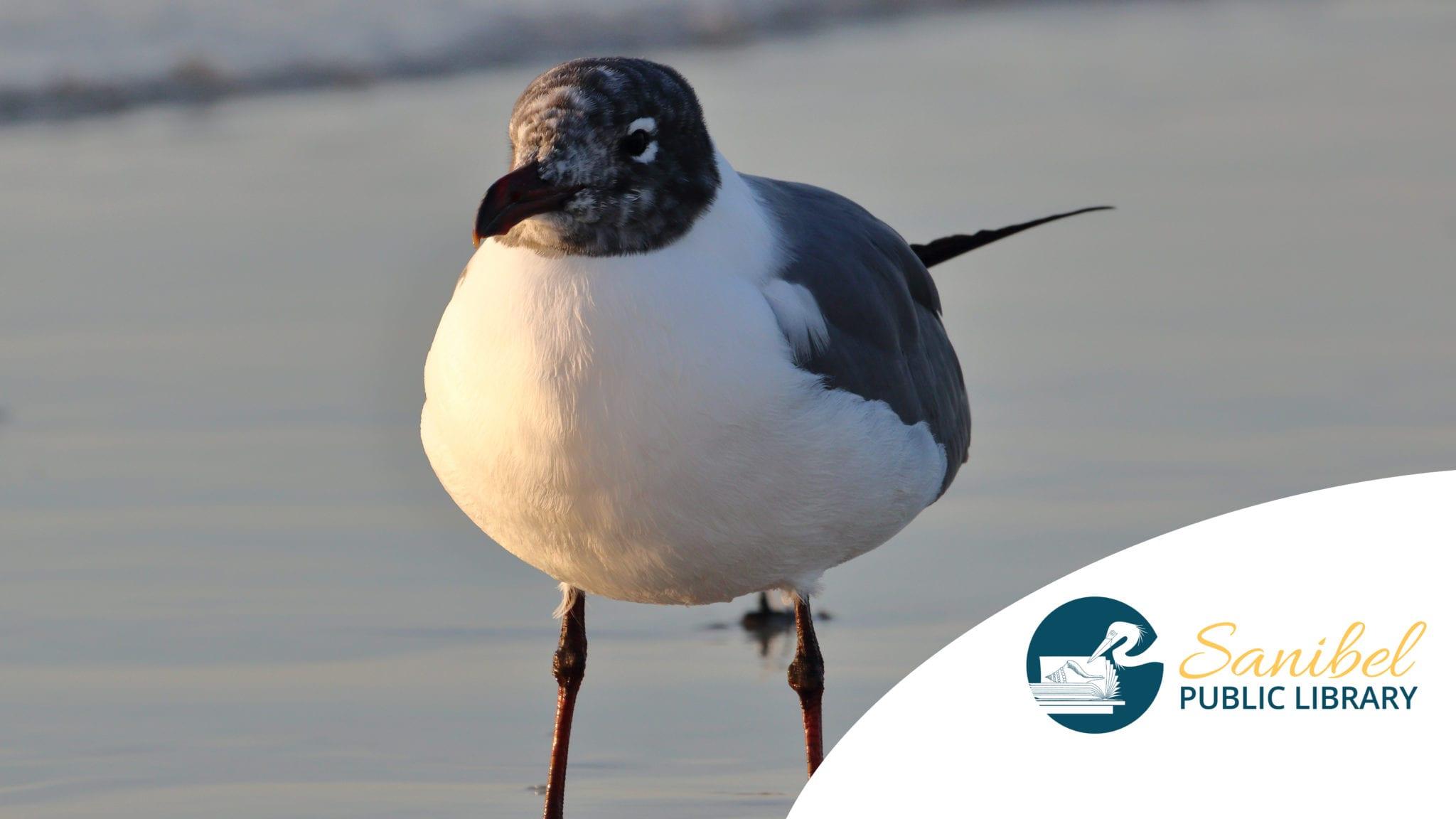 seagull-smile